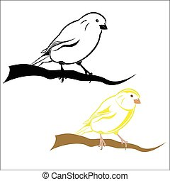 Canary - Vector illustration - Canary on a white background.