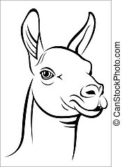 Lama - Vector illustration - Lama on a white background.