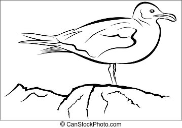 Seagull - Vector illustration - Seagull on a white...