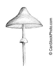 Original pencil drawing by the mushroom.
