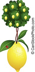Lemon tree in a lemon - Scalable vectorial image...