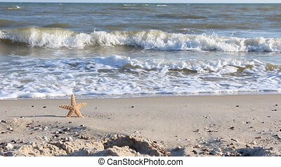 Starfish on the beach at sunsetHD