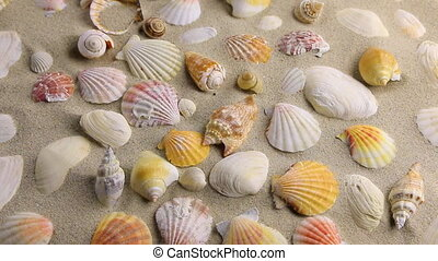 Approximation of sea shells  lying on the sand, top view. HD
