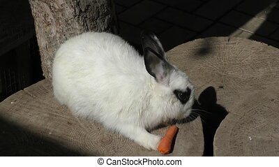 Little rabbit eats carrots - Little rabbit eats fresh...