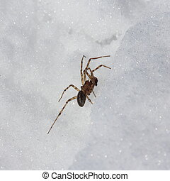 Spider in the snow in winter. Beautiful Macro photo