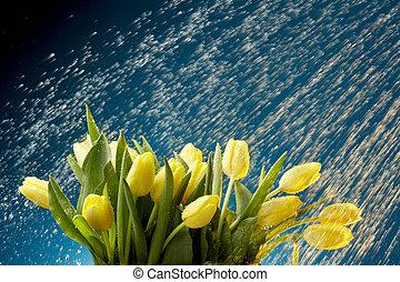 Tulips in the rain - Yellow tulips caught in rain...