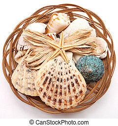 shell - Sea shell set isolated over white background