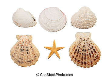 shells - Set of sea shells Isolated on white