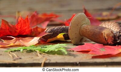 Mushroom, fir cones, autumn leaves