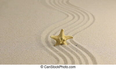 Approximation of starfish lying on the sand, top viewHD
