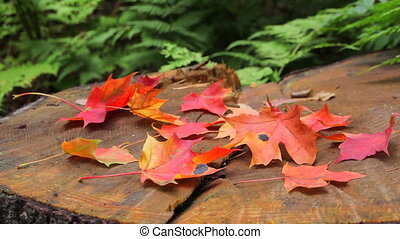 Autumn leaves of maple on stamp
