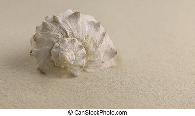 Wind blowing on the sand  white seashell.HD