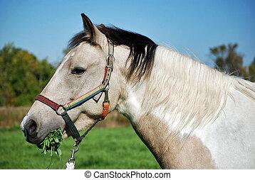Alfalfa Lunch - Horse munching on fresh alfalfa.