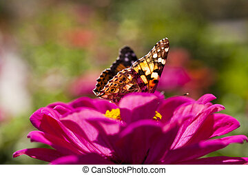 Butterfly on a flower - The butterfly on a flower collecting...