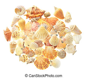 Set of seashells Isolated on White Background