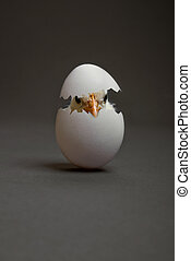nestling - one white egg with chicken, on grey background,...