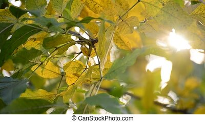 sun's rays are punched through the autumn leaves