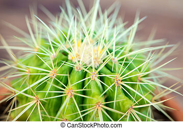 Cactus in flower pot on wood table - Closed up Cactus in...