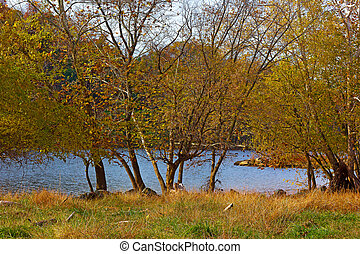 High grass and deciduous trees - Trees in autumn colors near...