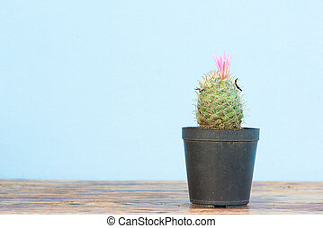 Cactus in flower pot on wood table - Cactus With Pink Flower...