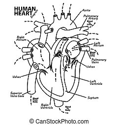 Human heart diagram anatomy tattoo - Vector Illustration Of...