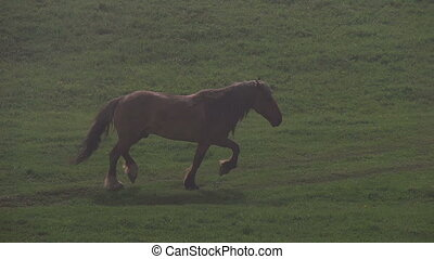 Horse in Morning Fog - Horse herd catches your light fog on...