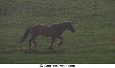 Horse in Morning Fog - Horse herd catches your light fog on...