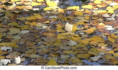 Autumn colours at the pond - Autumn leaves painted in...