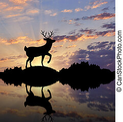 Silhouette of deer on the waterfront at sunset
