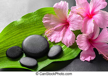 beautiful spa concept of pink hibiscus flowers and zen...