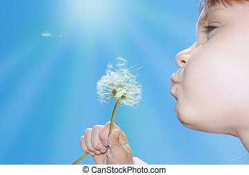 dandelion wishing blowing seeds - child blowing away...