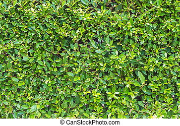 Green leaves wall patten background