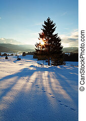 sunbeams behind spruce tree in winter Alps, Germany