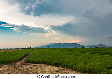 Cloudy view in Delta del Ebro - Beautiful cloudy view in...