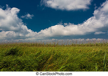 Green fields in Delta del Ebro - Green fields of rice under...