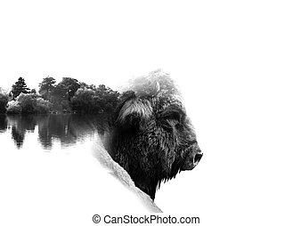auroch in low key monochrome portrait. Double exposure...