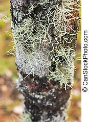 Lichen on tree trunk - Close up of Lichen on tree trunk