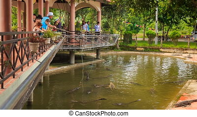 crocodile farm servants and tourists feed crocodiles - YANG...