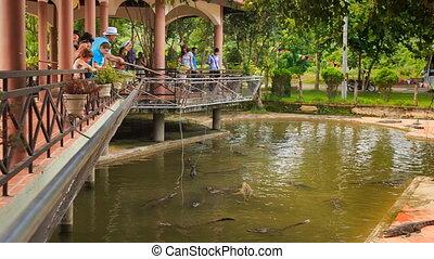 crocodile farm servants and tourists feed crocodiles - YANG...