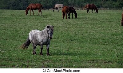Pony between horses in a meadow