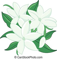 Jasmine flowers - Vector Illustration of jasmine flowers...