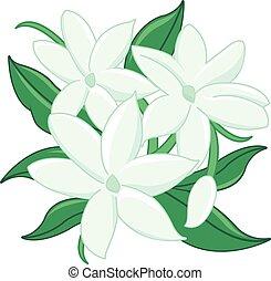 Jasmine flowers - Vector Illustration of jasmine flowers...