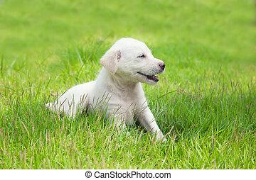 White happy puppy