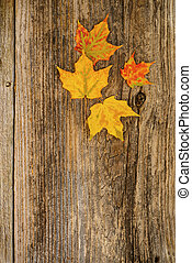 Autumn Background - Colorful maple leaves on a weathered...