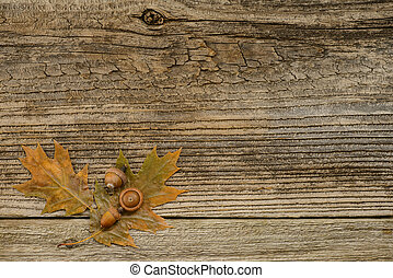 Autumn Oak - Oak leaves and acorns on a weathered barnboard...