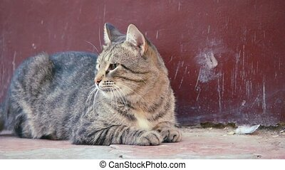 Stray cat resting on the ground - Stray tabby cat resting on...