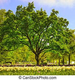 Garden in Keukenhof, tree and tulip flowers. Netherlands