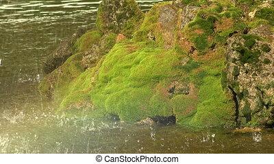 Stones, moss, drops, water 4K - Stones, moss, drops, water...