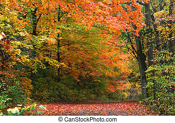 Autumn in Allegheny national forest