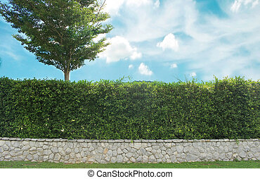 Grown tree with brick wall and ornamental shrub